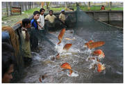 Quality Asian Arowana Fishes Now On Sale
