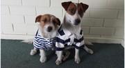Dog Bark Collar Anti Bark Collar Remote Training Collar,  Electrical do