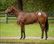TestaRossa x Vogalargo - Racehorse Syndications Australia