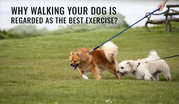 Why Walking Your Dog Is Regarded As The Best Exercise?