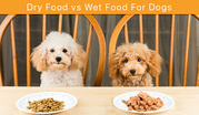 Dry Food vs Wet Food For Dogs
