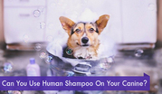 Can You Use Human Shampoo On Your Canine