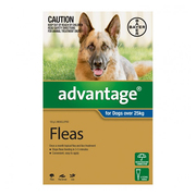 Flea and Tick control - Advantage for Xlarge Dogs