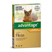 Advantage for Cats - Flea Control Treatment